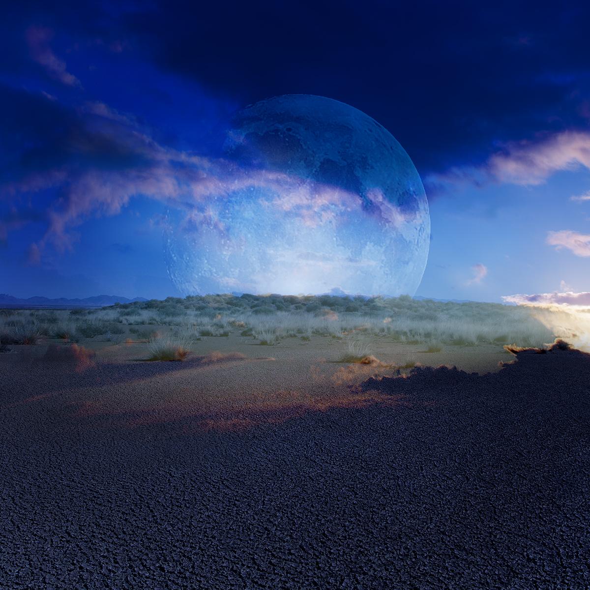alice zilberberg desert