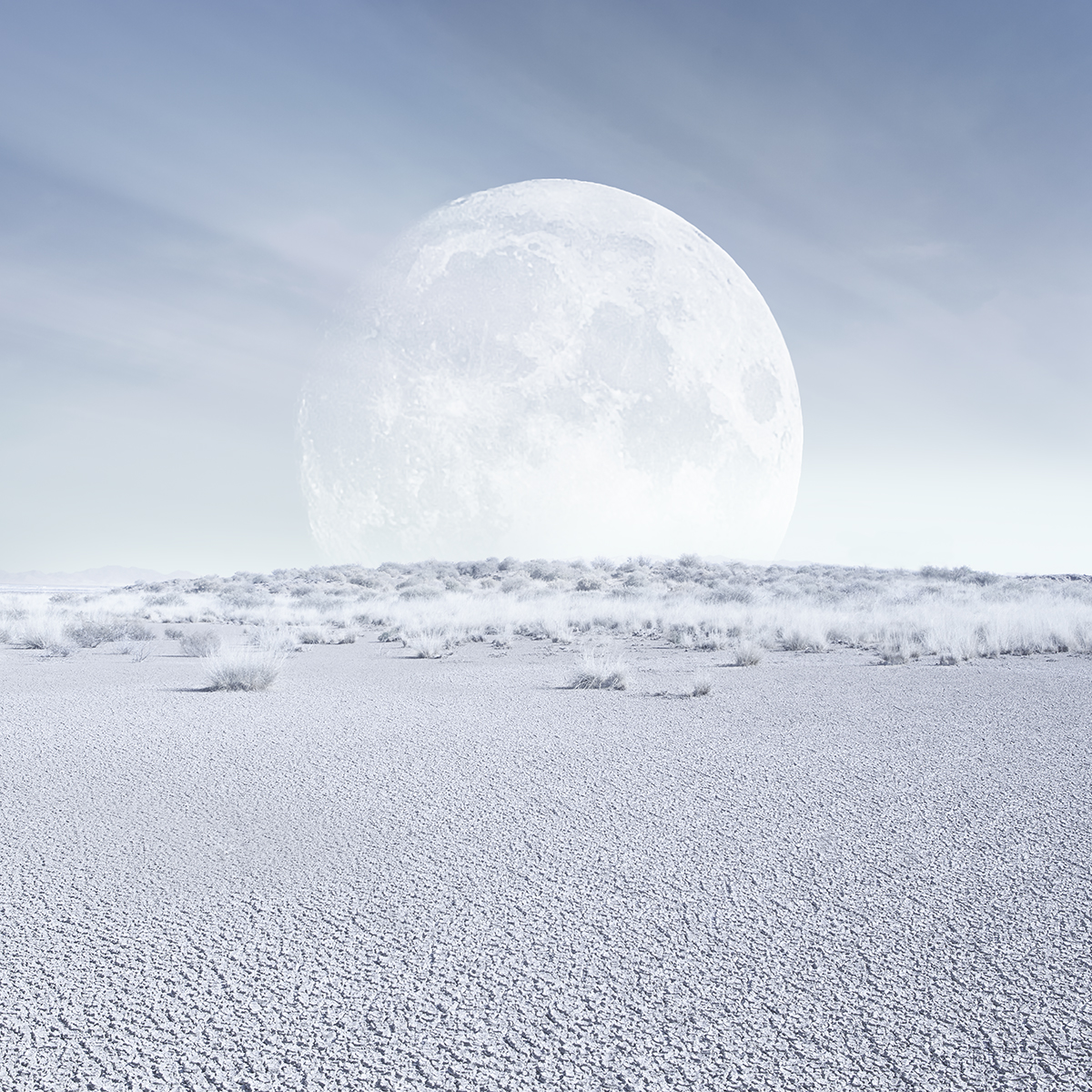 alice zilberberg desert moon
