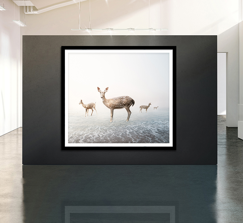 animal art photography