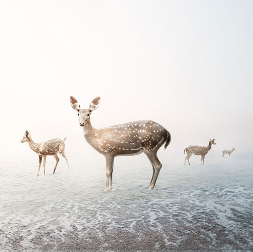 deer surreal photography