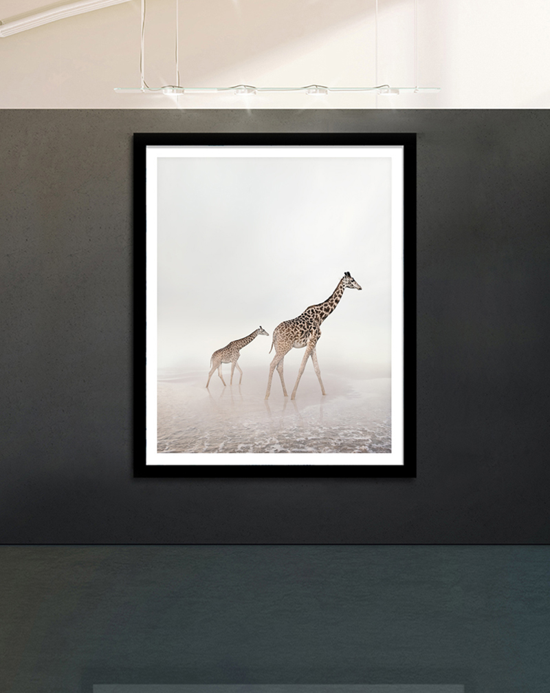 giraffe art photography